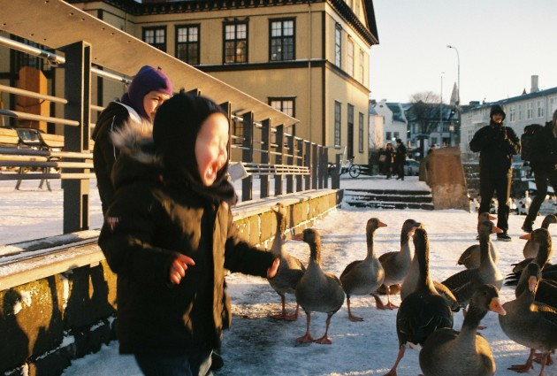 Feeding the geese at Tjörnin