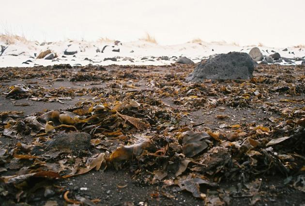 Reykjavik, Iceland beach