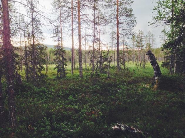 Syöte National Park, Finland