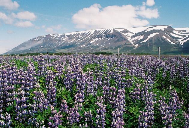 Skagafjörður, Iceland