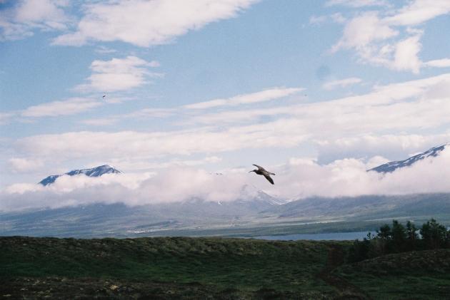 Hrisey Island, Iceland