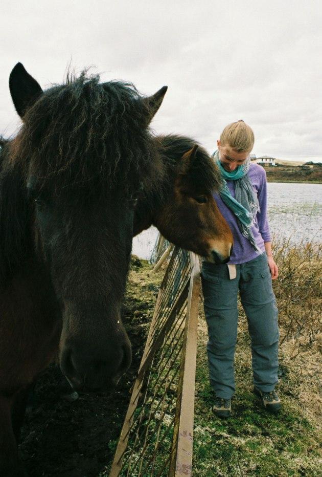celandic Horses by Mývatn