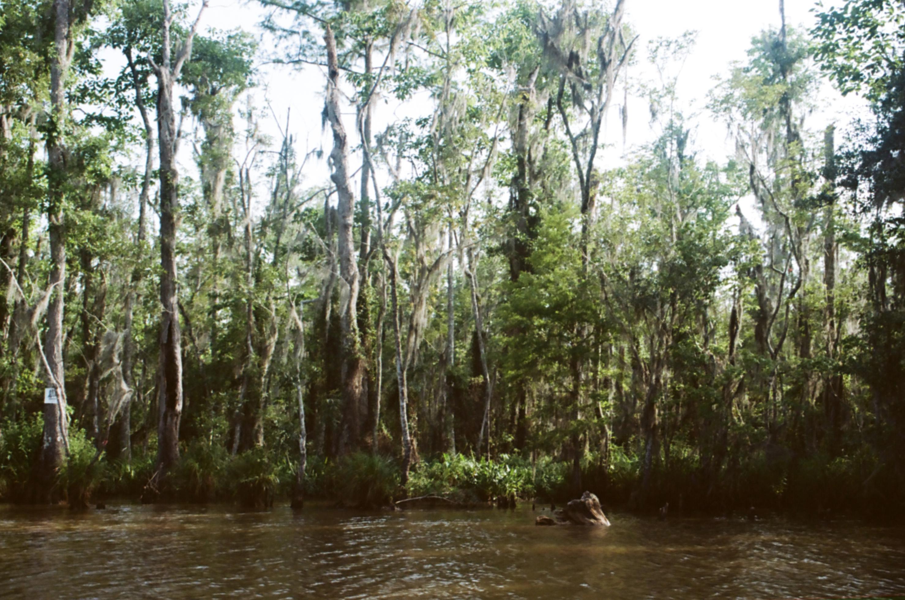 Swamp Tours Slidell