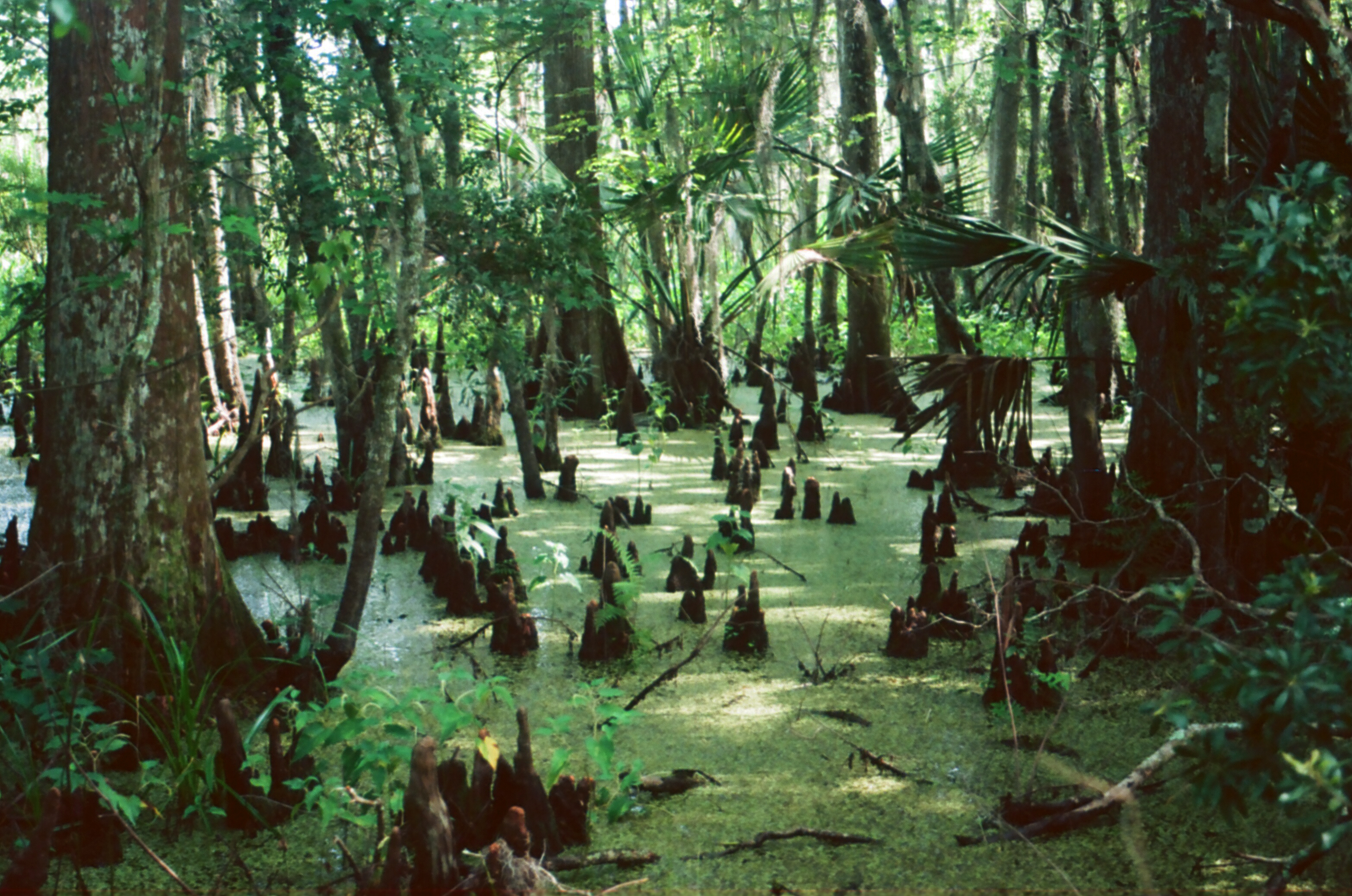 how to get to jean lafitte national park